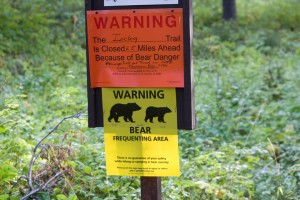 Bear Warning Board