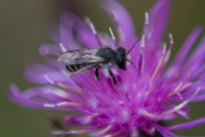 Bee on Purple